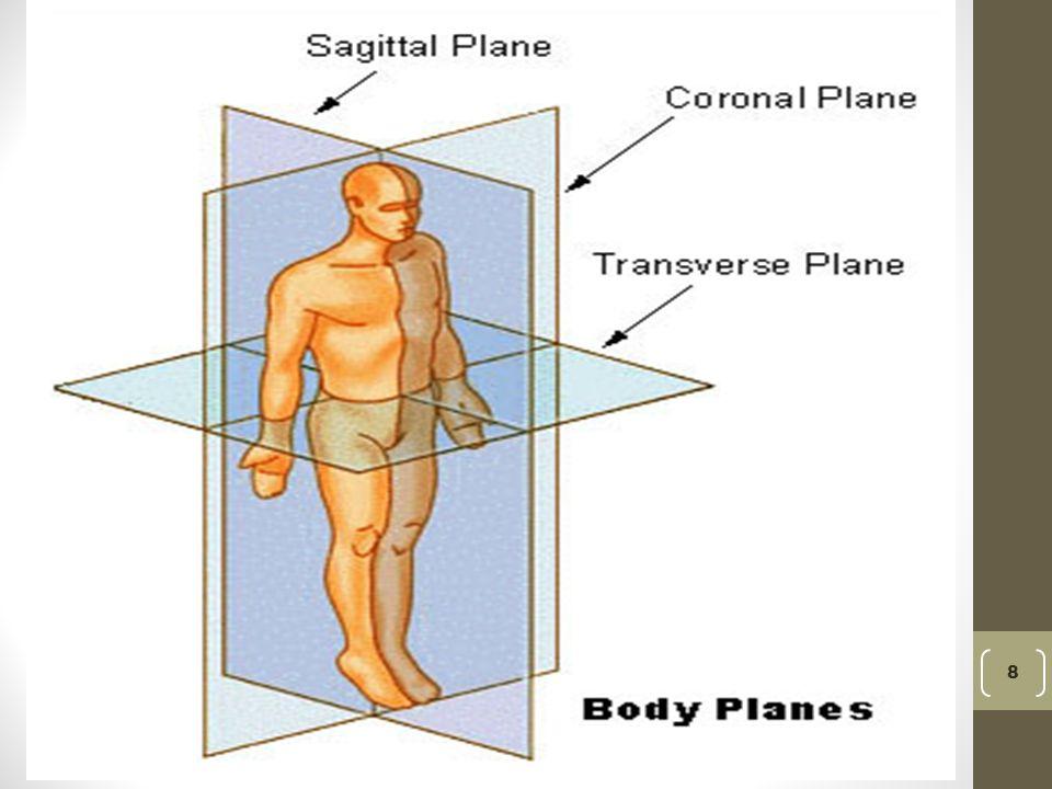 Anatomy sagittal plane