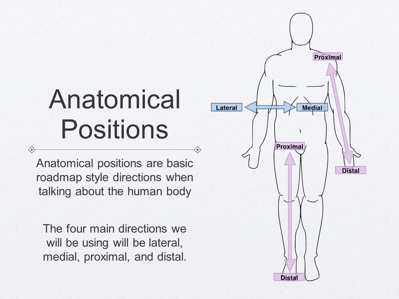 Anatomical Directions Need To Know Anatomical Planes Sagittal Plane