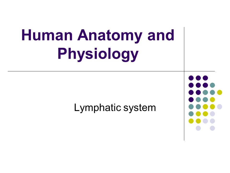 Human Anatomy and Physiology Lymphatic system. Components 1 ...
