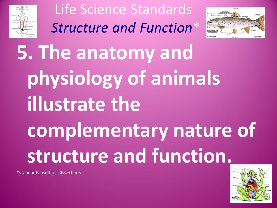 Dorable Anatomy And Physiology Standards Componente - Anatomía de ...