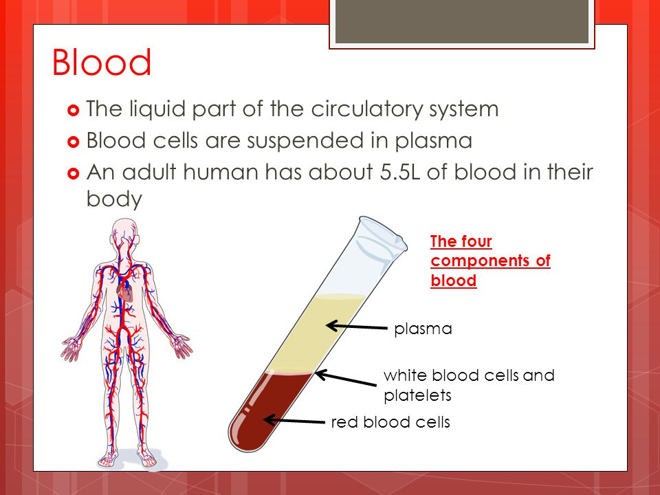 Blood  The liquid part of the circulatory system  Blood cells are suspended in plasma  An adult human has about 5.5L of blood in their body plasma white blood cells and platelets red blood cells The four components of blood