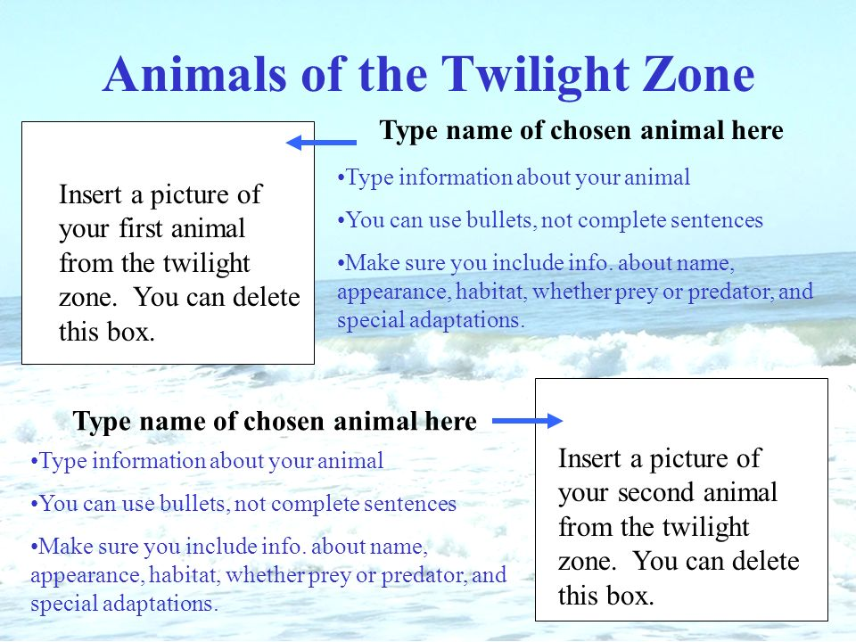 Name of ocean give credit to who worked on research and slide show animals of the twilight zone insert a picture of your first animal from the twilight zone toneelgroepblik Choice Image