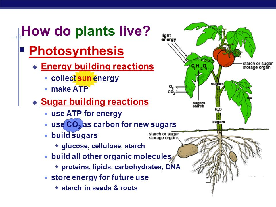 Photosynthesis: Life from Light and Air Energy needs of life ...