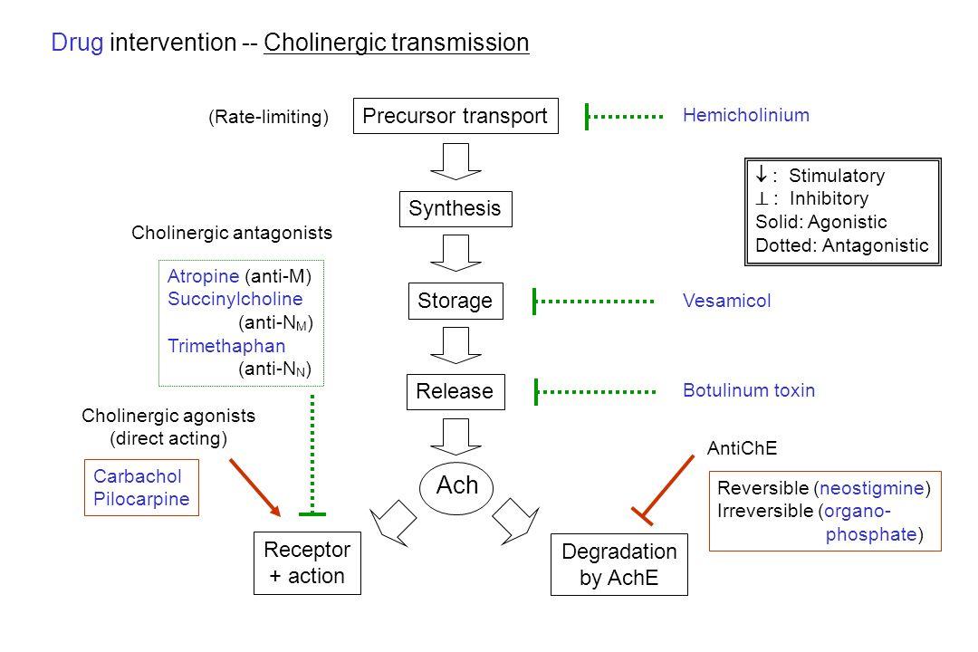 Drug intervention -- Cholinergic transmission Precursor transport Synthesis Hemicholinium Storage Vesamicol Release Botulinum toxin Degradation by Ach