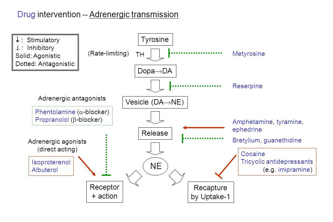 Drug intervention -- Adrenergic transmission Tyrosine Dopa  DA Metyrosine Vesicle (DA  NE) Reserpine Release Bretylium, guanethidine Recapture by Up