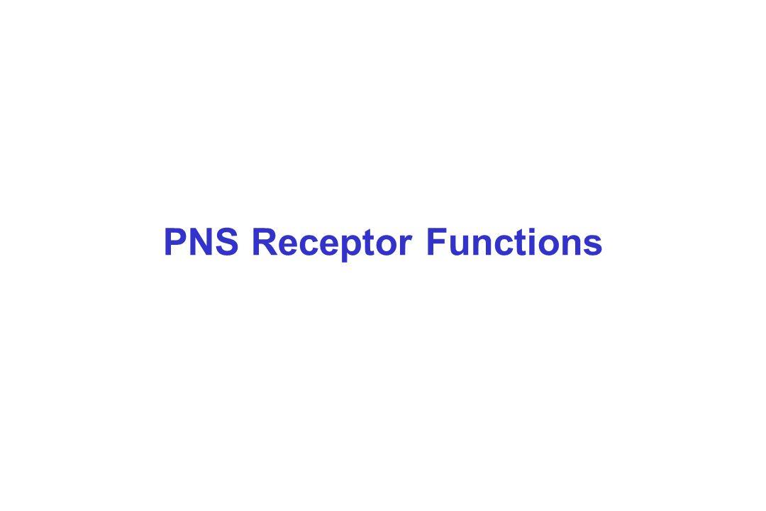PNS Receptor Functions