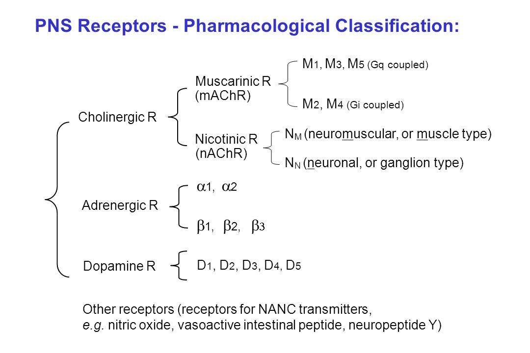 PNS Receptors - Pharmacological Classification: Cholinergic R Adrenergic R Dopamine R Muscarinic R Nicotinic R M 1, M 3, M 5 (Gq coupled) M 2, M 4 (Gi