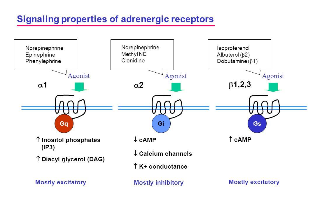 Agonist Signaling properties of adrenergic receptors Agonist 11 22  1,2,3 GqGiGs  Inositol phosphates (IP3)  Diacyl glycerol (DAG)  cAMP  cAM