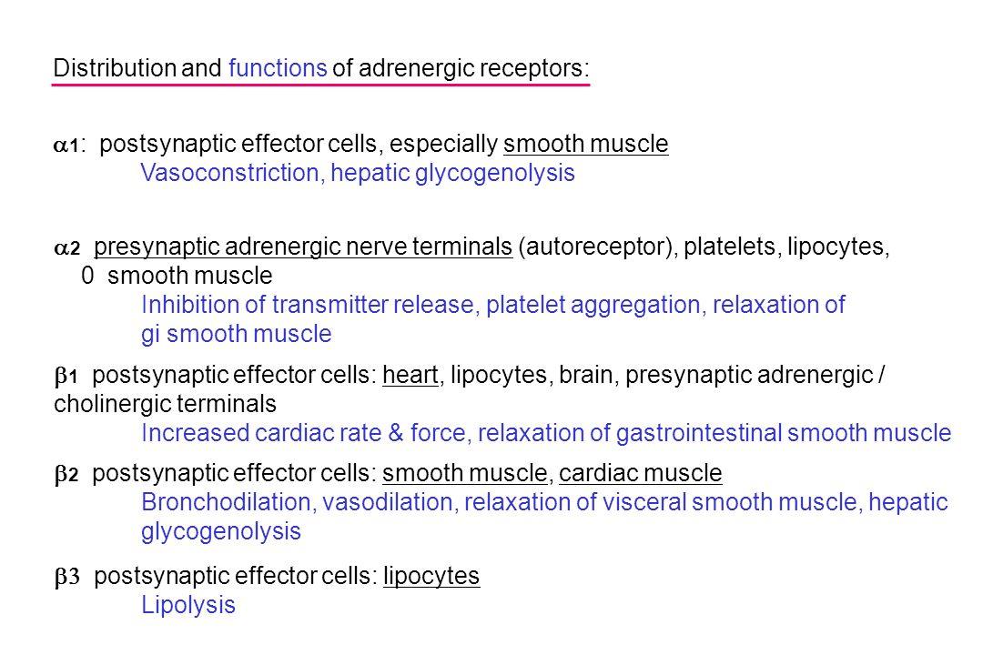  1 : postsynaptic effector cells, especially smooth muscle Vasoconstriction, hepatic glycogenolysis  2 presynaptic adrenergic nerve terminals (autor