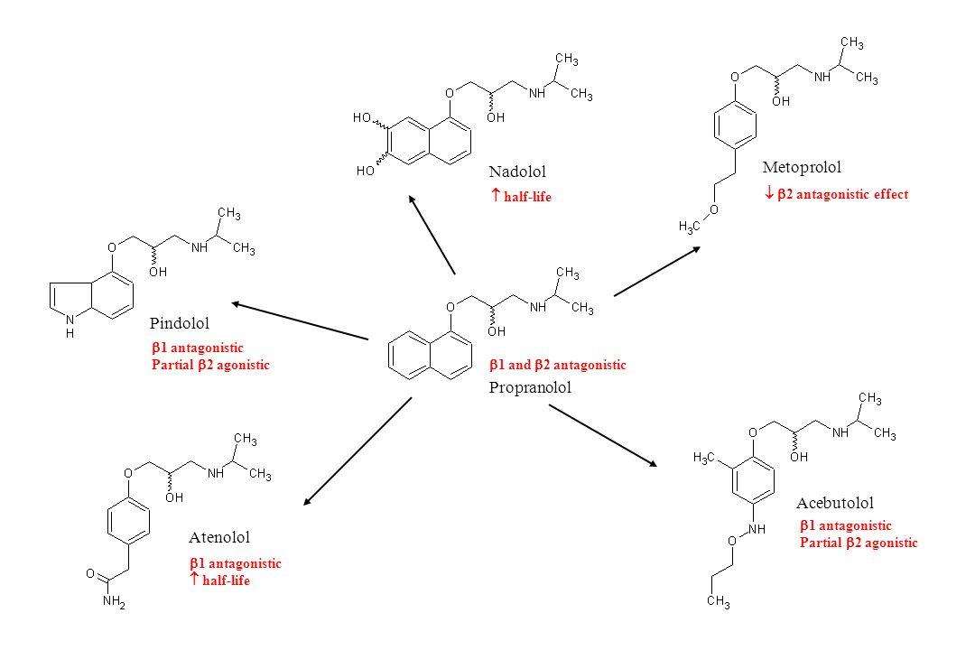 Propranolol Pindolol Acebutolol Nadolol Metoprolol Atenolol  1 antagonistic  half-life  1 and  2 antagonistic  half-life   2 antagonistic effec