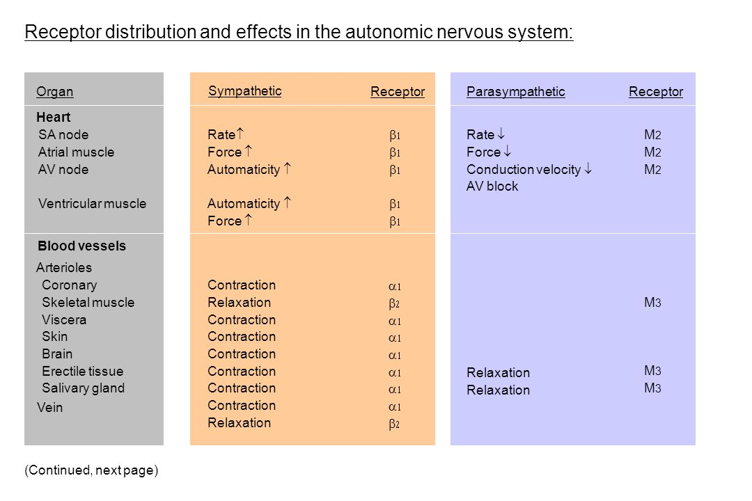 Receptor distribution and effects in the autonomic nervous system: OrganReceptorParasympatheticReceptor Heart Rate  Force  Automaticity  Force  