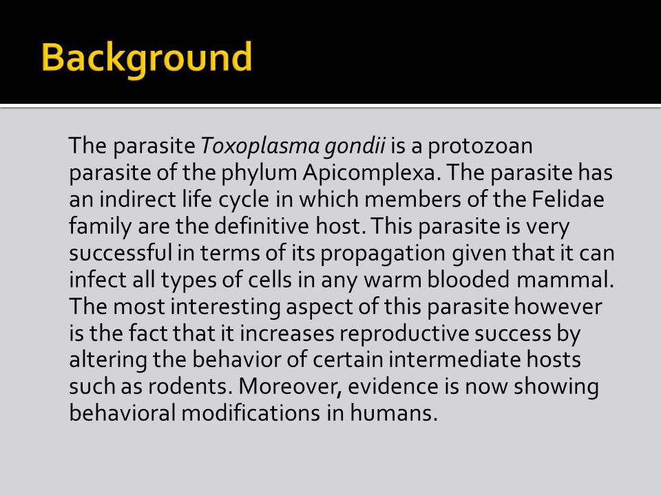 Toxoplasma Slide