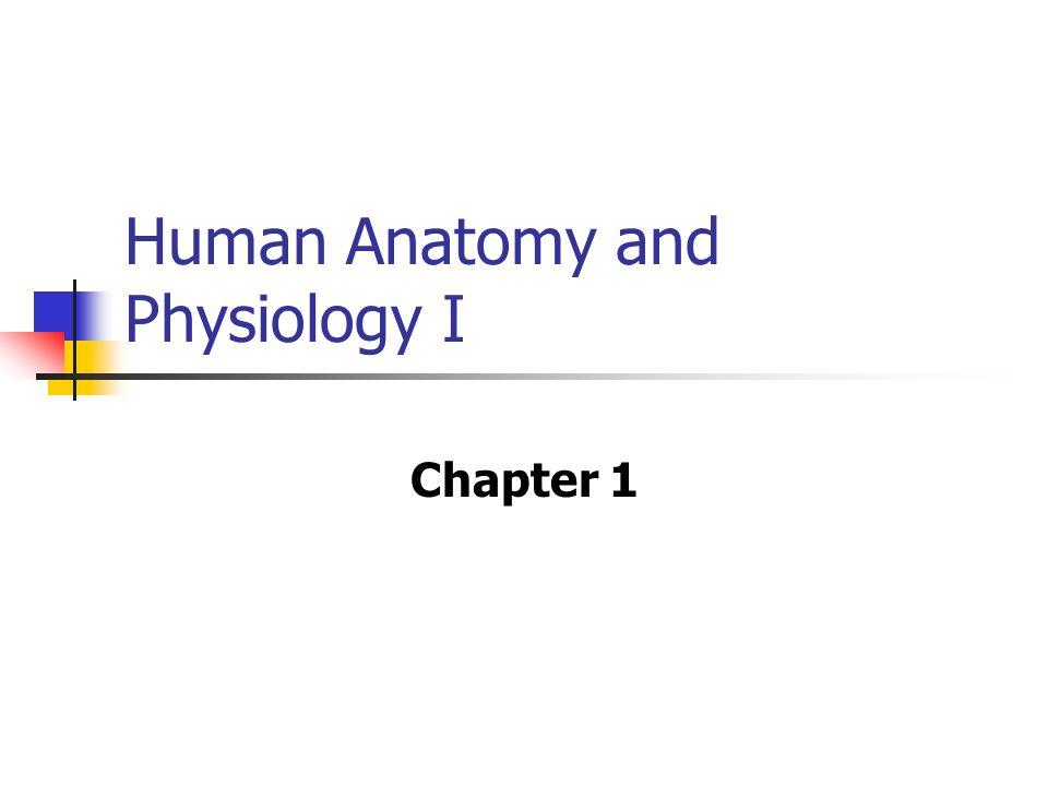 Ausgezeichnet Anatomy And Physiology Chapter 1 Flashcards Ideen ...