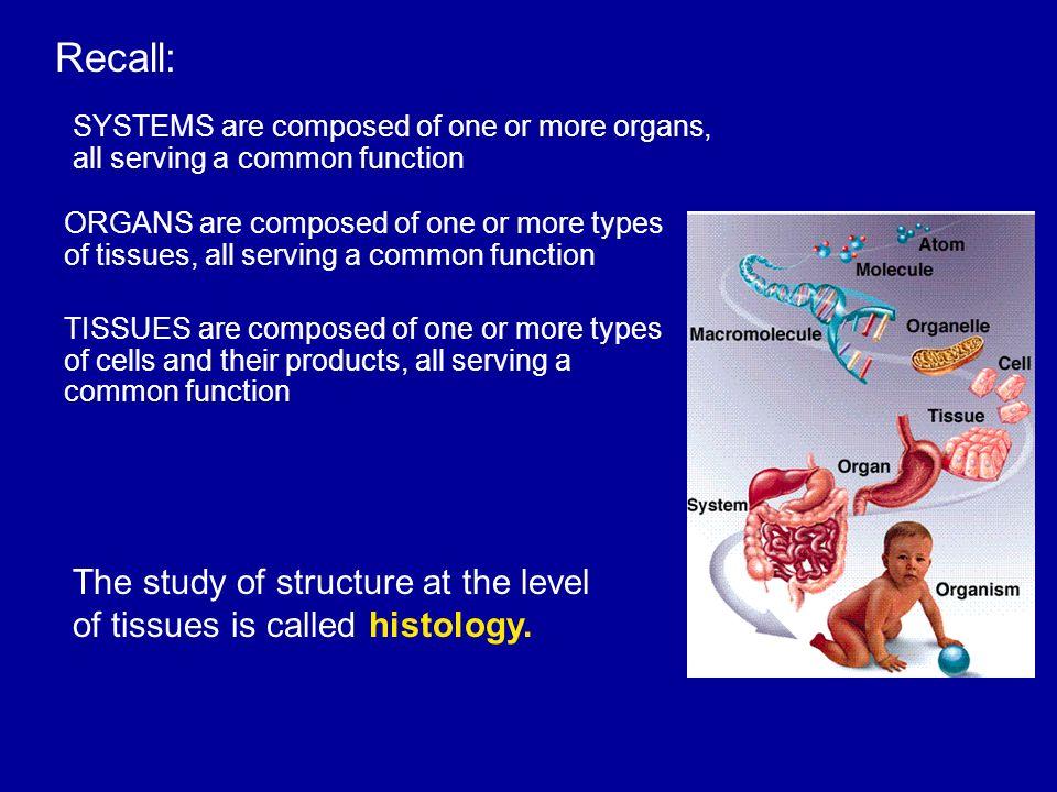 Ziemlich Anatomy And Physiology Histology Slides Fotos - Menschliche ...