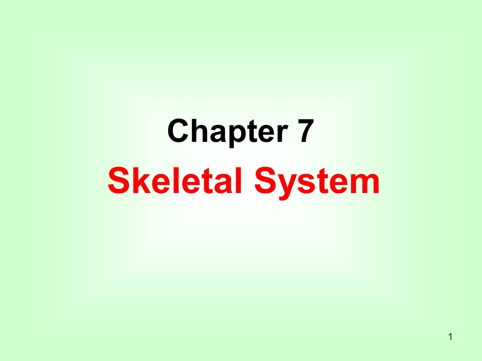 1 Chapter 7 Skeletal System. 2 Introduction A. Bones are very active ...