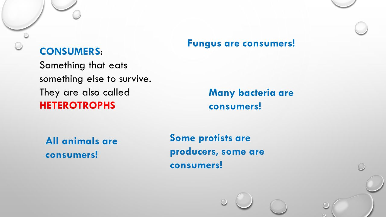 CONSUMERS: Something that eats something else to survive.