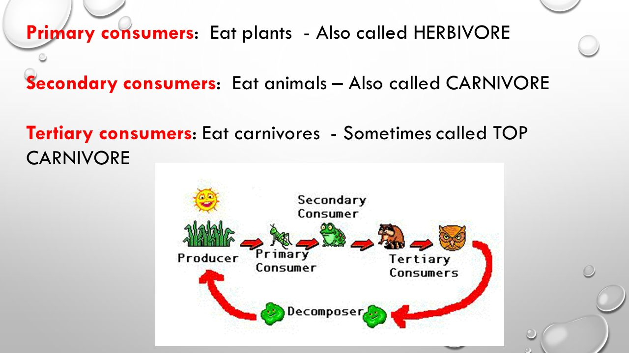 Primary consumers: Eat plants - Also called HERBIVORE Secondary consumers: Eat animals – Also called CARNIVORE Tertiary consumers: Eat carnivores - Sometimes called TOP CARNIVORE