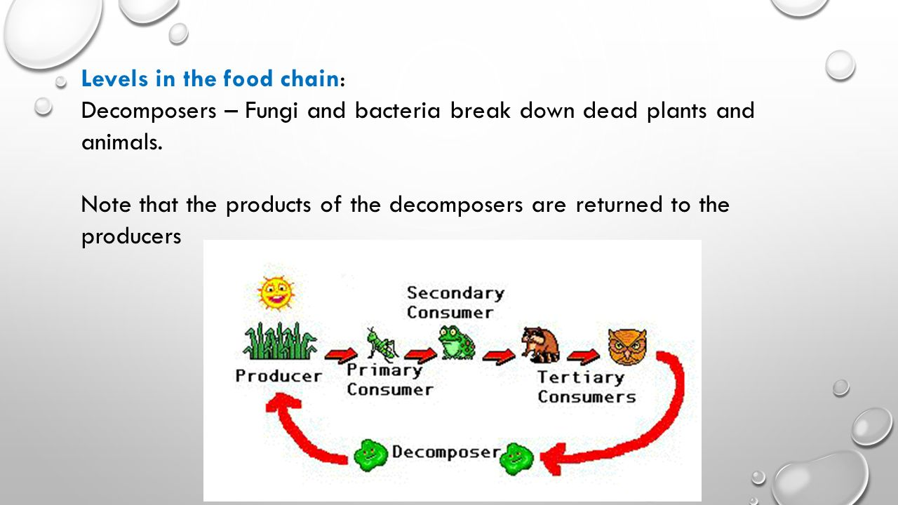 Levels in the food chain: Decomposers – Fungi and bacteria break down dead plants and animals.