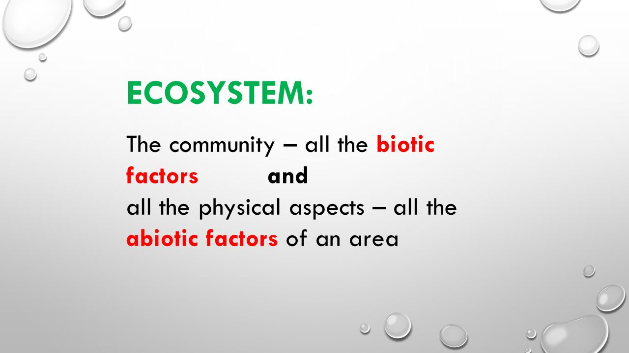 ECOSYSTEM: The community – all the biotic factors and all the physical aspects – all the abiotic factors of an area