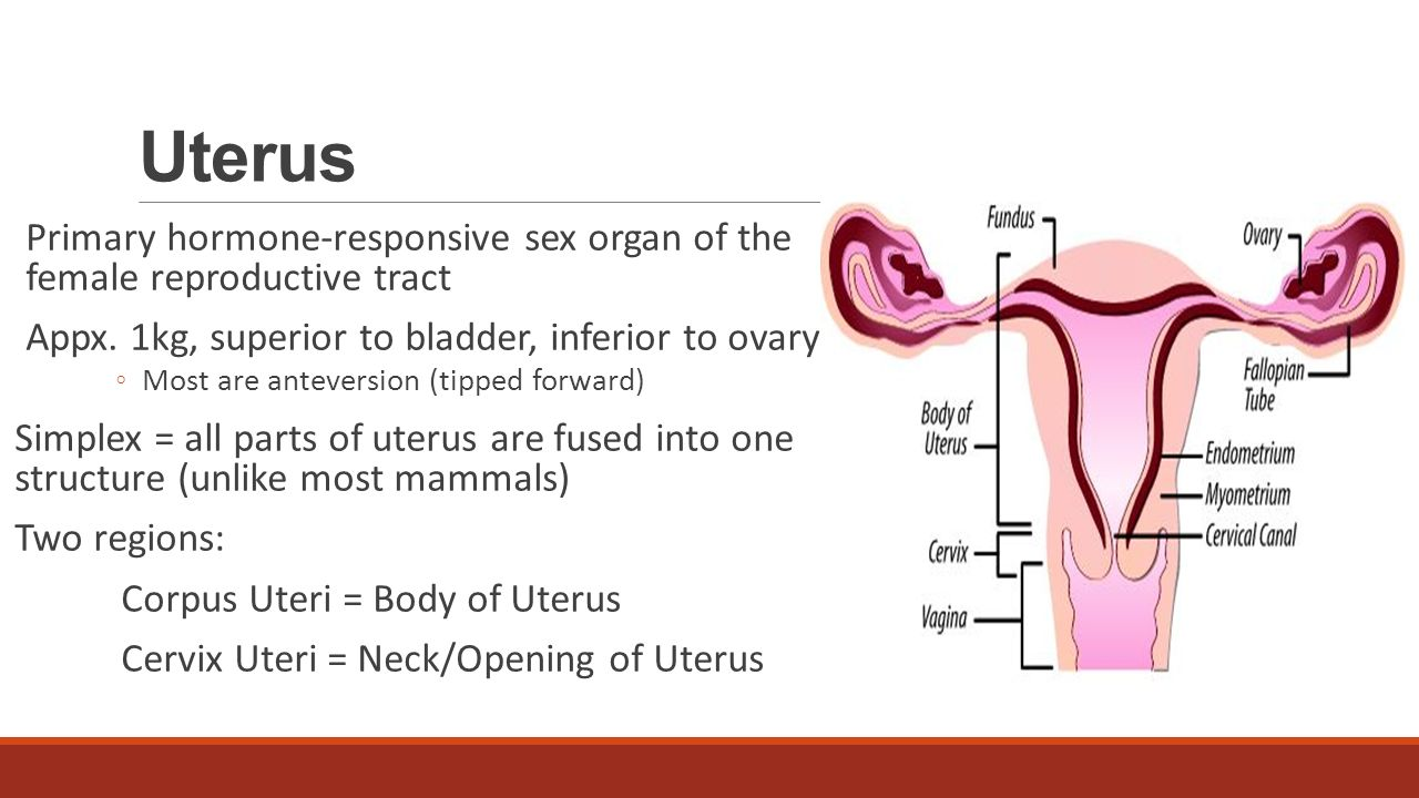Reproductive system anatomy