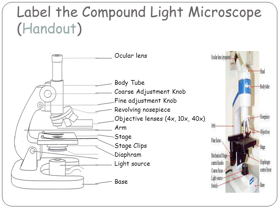 Parts of a microscope microscope basics label the compound light 2 label the compound light microscope handout ocular lens body tube coarse adjustment knob fine adjustment knob revolving nosepiece objective lenses 4x ccuart Gallery