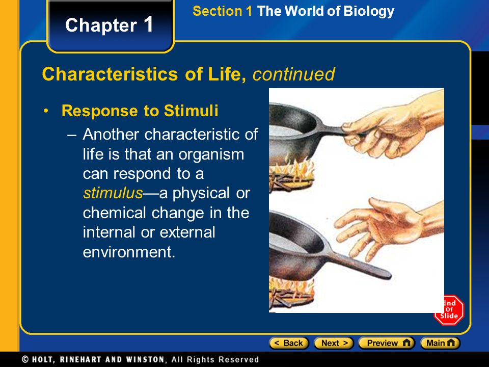 Section 1 The World of Biology Chapter 1 Characteristics of Life, continued Response to Stimuli –Another characteristic of life is that an organism can respond to a stimulus—a physical or chemical change in the internal or external environment.