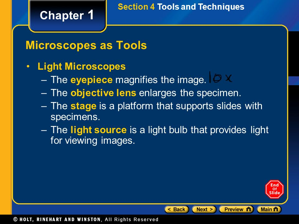 Section 4 Tools and Techniques Chapter 1 Microscopes as Tools Light Microscopes –The eyepiece magnifies the image.