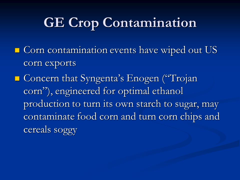 GE Crop Contamination Corn contamination events have wiped out US corn exports Corn contamination events have wiped out US corn exports Concern that Syngenta's Enogen ( Trojan corn ), engineered for optimal ethanol production to turn its own starch to sugar, may contaminate food corn and turn corn chips and cereals soggy Concern that Syngenta's Enogen ( Trojan corn ), engineered for optimal ethanol production to turn its own starch to sugar, may contaminate food corn and turn corn chips and cereals soggy