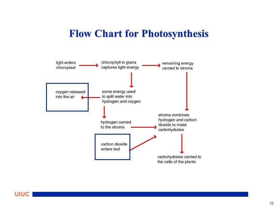 Steps Of Photosynthesis Flowchart Create A Flowchart