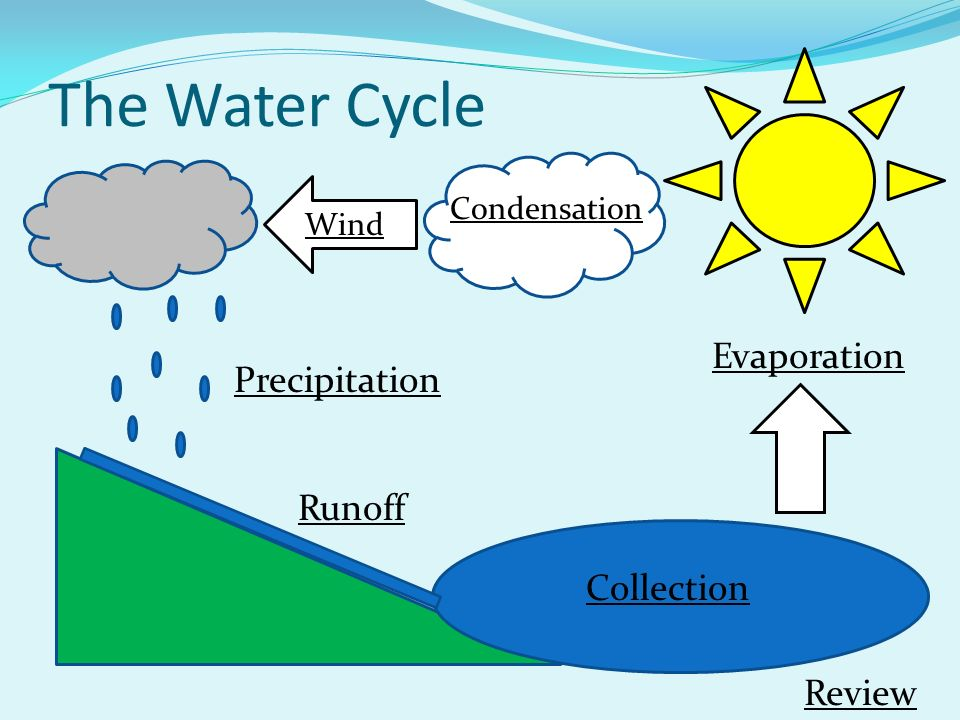 The Water Cycle Wind Condensation Precipitation Runoff Collection Review Evaporation