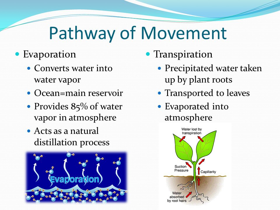 Pathway of Movement Evaporation Converts water into water vapor Ocean=main reservoir Provides 85% of water vapor in atmosphere Acts as a natural distillation process Transpiration Precipitated water taken up by plant roots Transported to leaves Evaporated into atmosphere