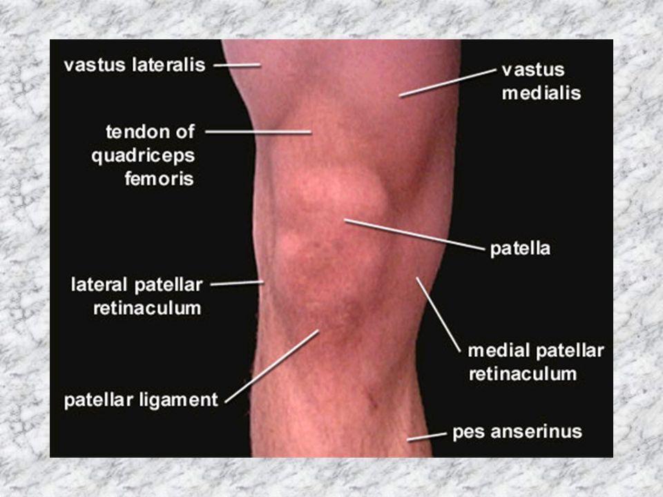 Knee Anatomy Bones Image collections - human body anatomy