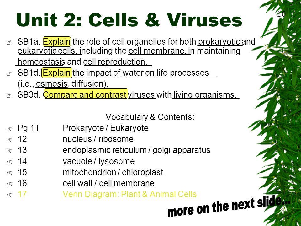 Prokaryotes Vs Eukaryotes Vs Viruses Venn Diagram Selol Ink