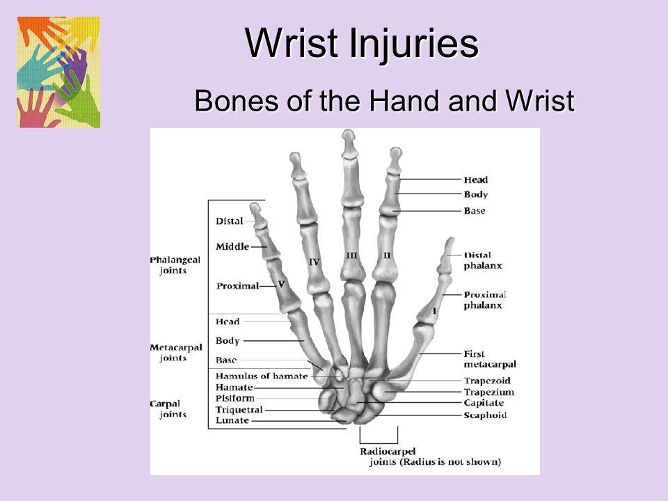 Bones Of The Hand And Wrist Wrist Injuries Olecranon Head Of Radius
