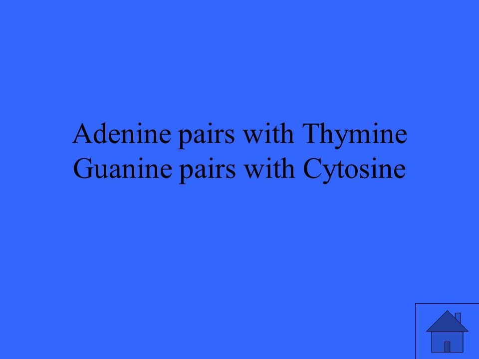 Adenine pairs with Thymine Guanine pairs with Cytosine