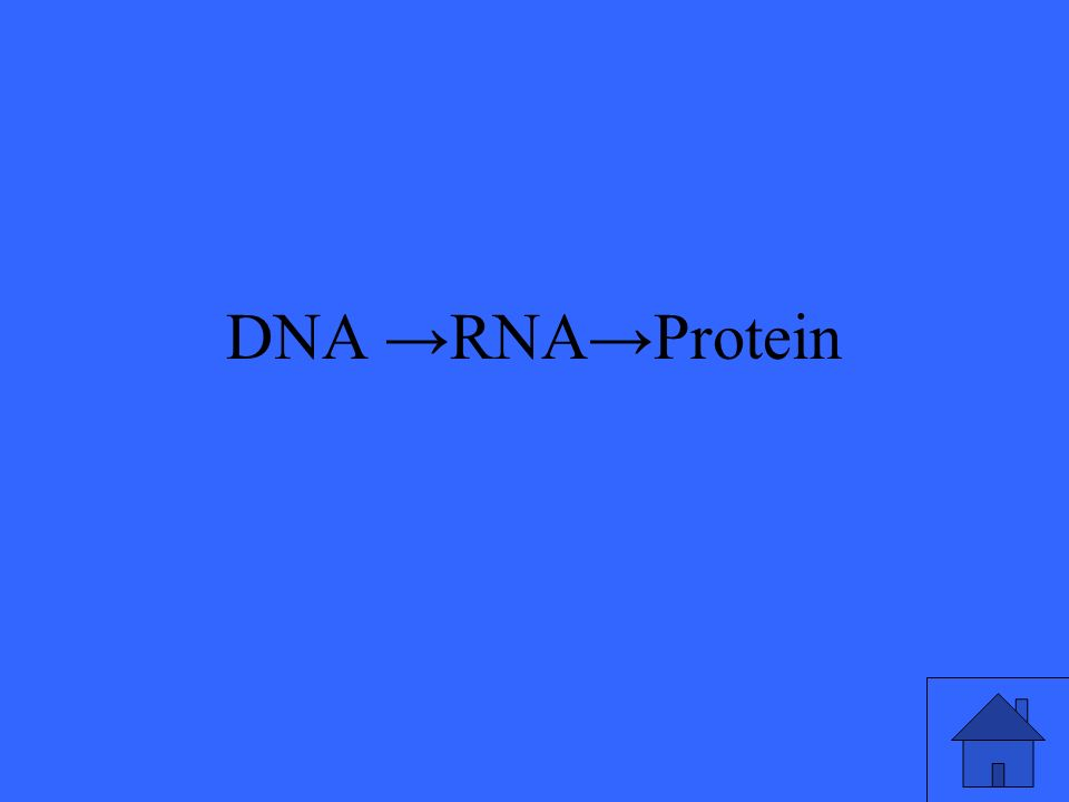 DNA →RNA→Protein