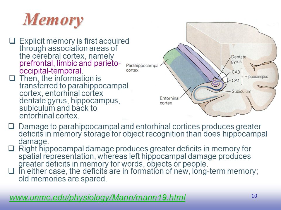 EE  Explicit memory is first acquired through association areas of the cerebral cortex, namely prefrontal, limbic and parieto- occipital-temporal.