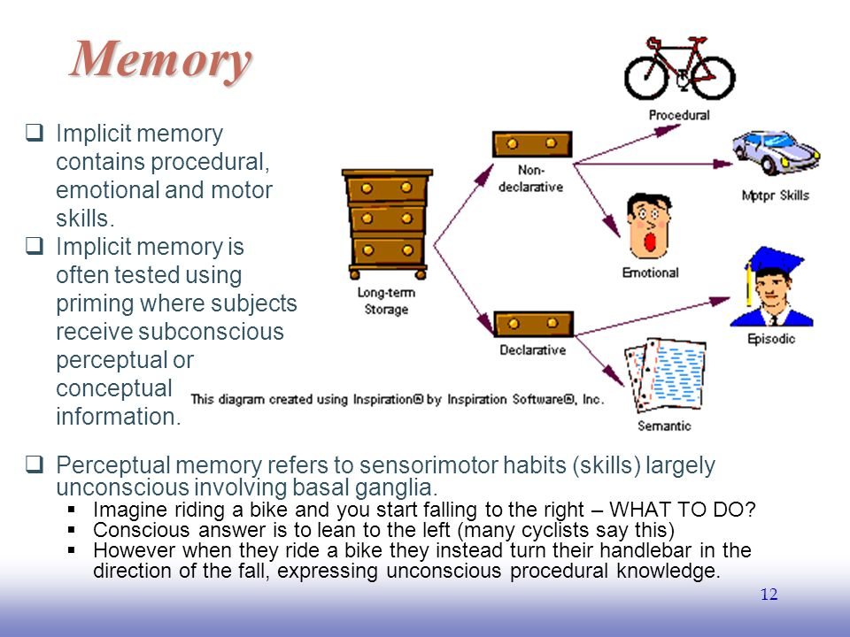 EE  Perceptual memory refers to sensorimotor habits (skills) largely unconscious involving basal ganglia.