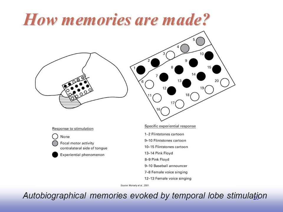 EE How memories are made Autobiographical memories evoked by temporal lobe stimulation
