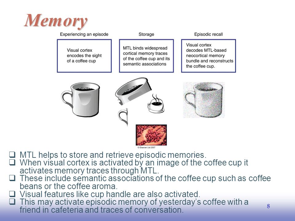 EE141 8  MTL helps to store and retrieve episodic memories.