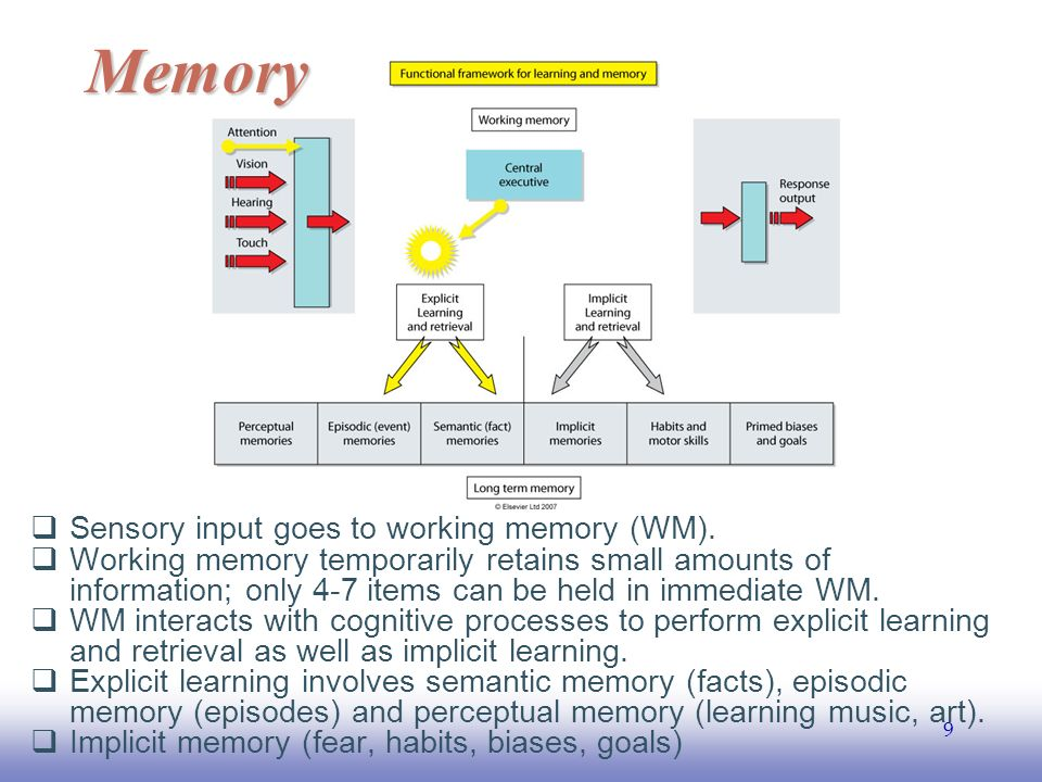 EE141 9  Sensory input goes to working memory (WM).
