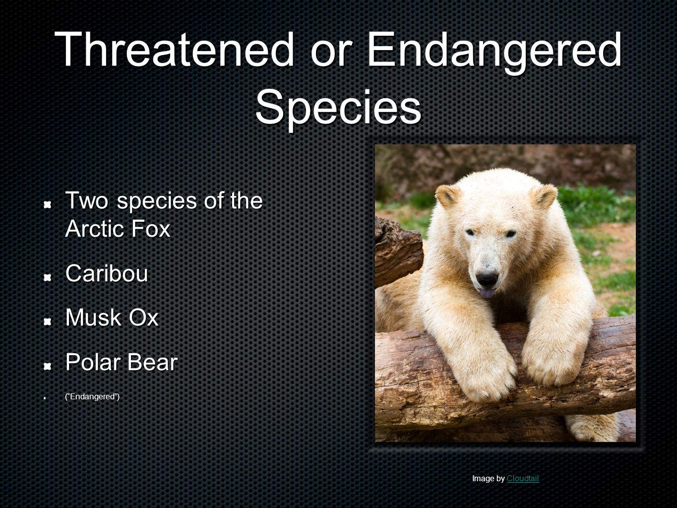 threatened species in north pole
