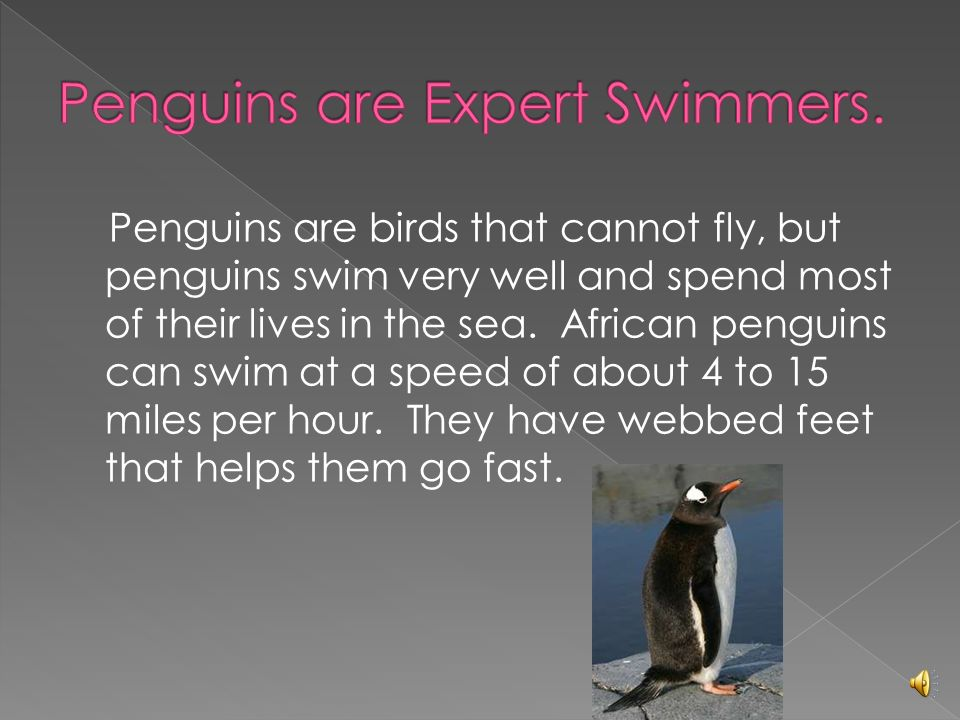 penguins birds that cannot fly essay Essay on sparrow bird there are some birds which have exceptions like the penguins found in the arctic regions that cannot fly.