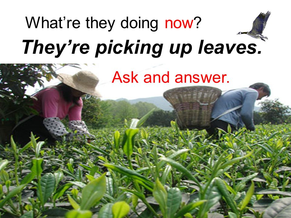 What're they doing now They're picking up leaves. Ask and answer.
