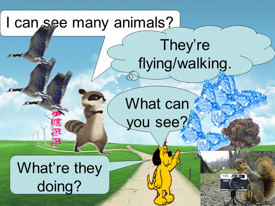 I can see many animals What can you see What're they doing They're flying/walking.