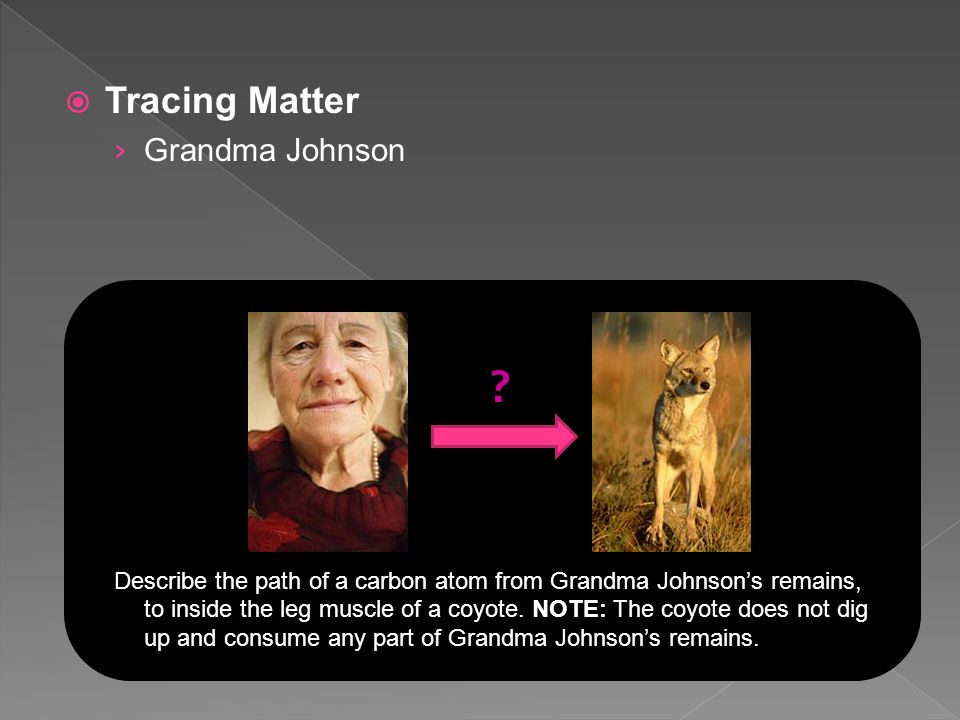  Tracing Matter › Grandma Johnson Describe the path of a carbon atom from Grandma Johnson's remains, to inside the leg muscle of a coyote.