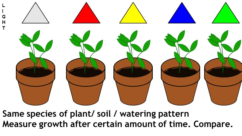 Same species of plant/ soil / watering pattern Measure growth after certain amount of time.