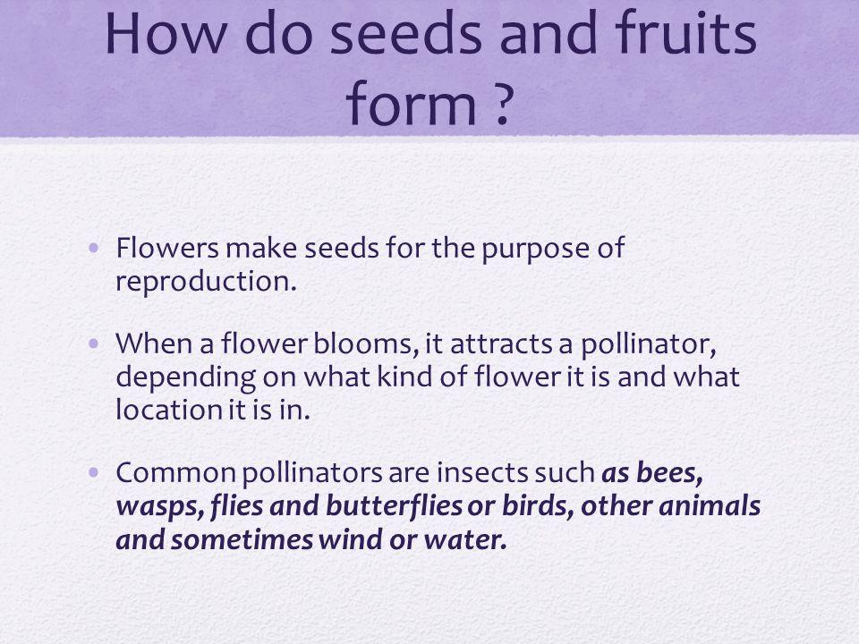 Flowers Make Fruits & Seeds. Basic Vocab! What is fertilization ...