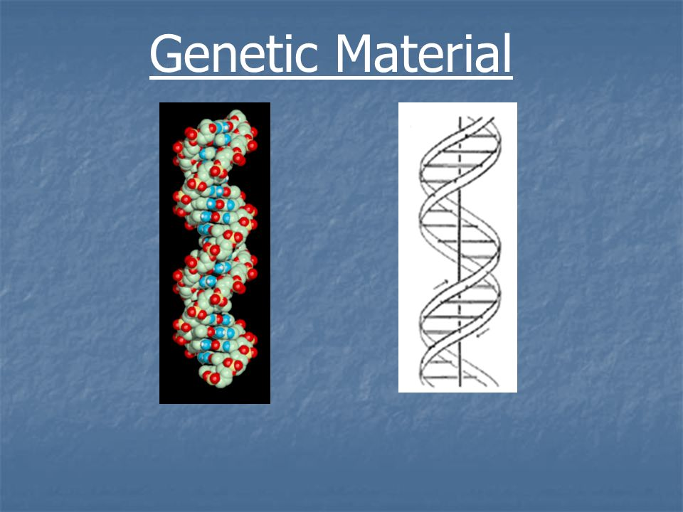 Genetic material the plant cell nucleic acids 1ribonucleic acids 1 genetic material malvernweather Choice Image
