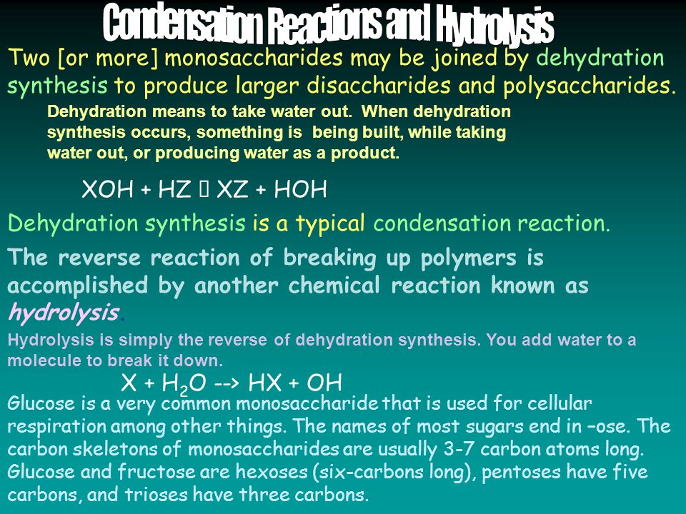 Two [or more] monosaccharides may be joined by dehydration synthesis to produce larger disaccharides and polysaccharides.